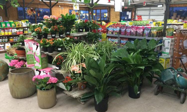 http://www.mybayarealandscapes.com/wp-content/uploads/2015/08/Indoorplants-1024x614-750x450.jpg